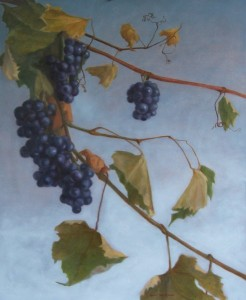 concord_grapes